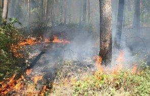 пожарникарите сливен спасиха 100 декара гора