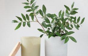 растенията пазят дома негативна енергия