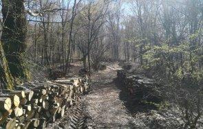 нелегални секачи заловиха горите велинград