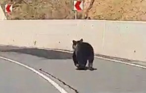 мечка изскочи пътя девин кричим посред бял ден видео