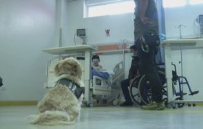 кучета терапевти помагат лечението болни covid