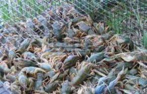 кошове раци иззеха бракониери язовир ястребино