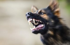 бездомни кучета нападнаха началника руо благоевград