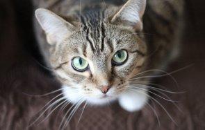 сестрата бритни спиърс обвини илон мъск смъртта котките