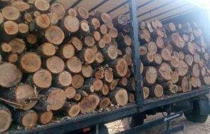 затвориха фирма преработка дърва заради измама