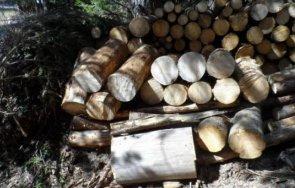 трима задържани незаконна дървесина петрич