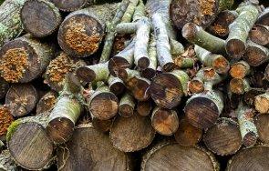 гореща информация задържани незаконно добити дърва няколко региона страната