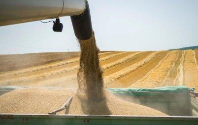 сериозен ръст добива пшеница ечемик бургаско