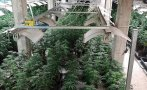 Прокуратурата с горещи подробности за разбитата наркооранжерия в Ловешко