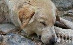 Прокуратурата разследва убийството на куче