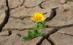 половин българия застрашена суша