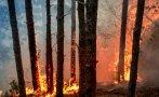 пожар унищожи декара гора пазарджишко село