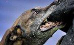домашно куче нахапа дете лицето