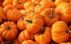 есенни апаши задигнаха тона тикви земеделски имот санданско