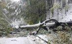 ТЕЖКА ЗИМА В СЕВЕРОЗАПАДА: Селища в Монтанско останаха без ток, отрязан е достъпът до хижа Ком