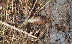 Матроси обезвредиха мина в бургаския жк Меден рудник